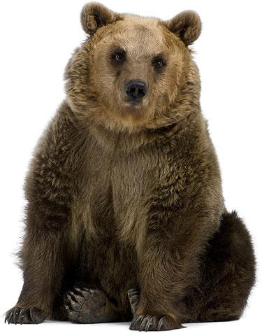 bearsit